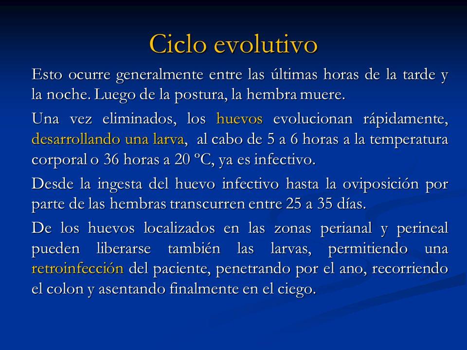 Ciclo evolutivo Esto ocurre generalmente entre las últimas horas de la tarde y la noche. Luego de la postura, la hembra muere.