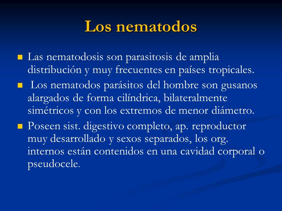 Los nematodos Las nematodosis son parasitosis de amplia distribución y muy frecuentes en países tropicales.