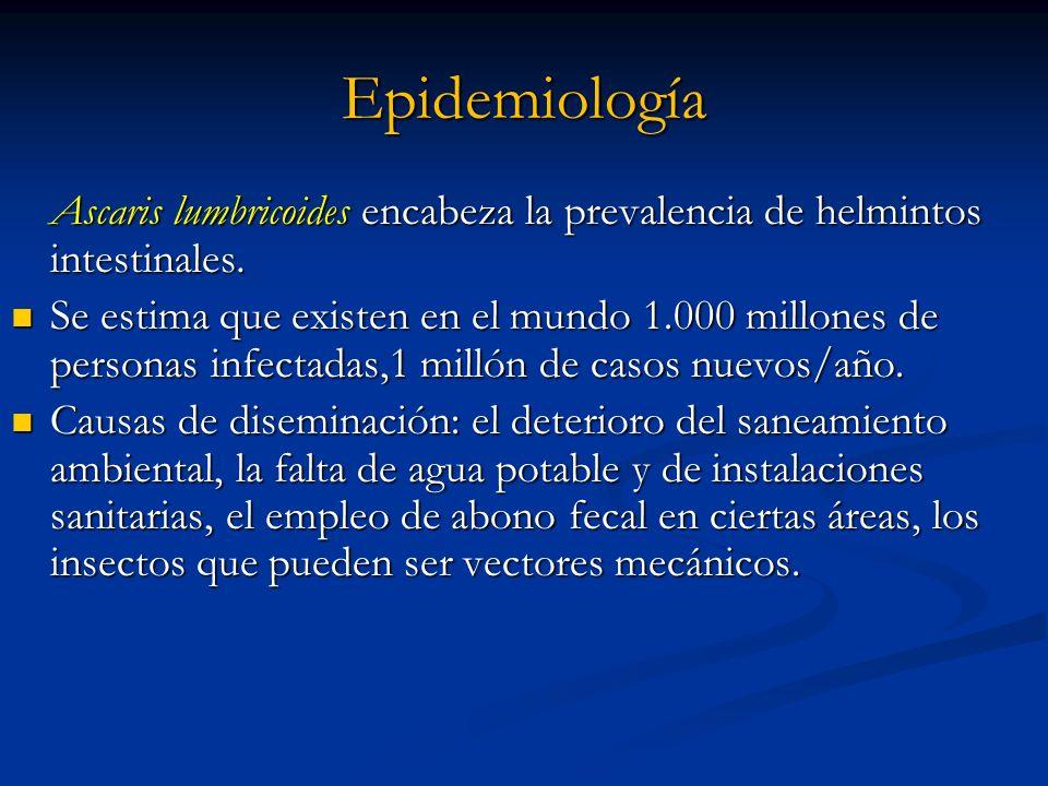 EpidemiologíaAscaris lumbricoides encabeza la prevalencia de helmintos intestinales.