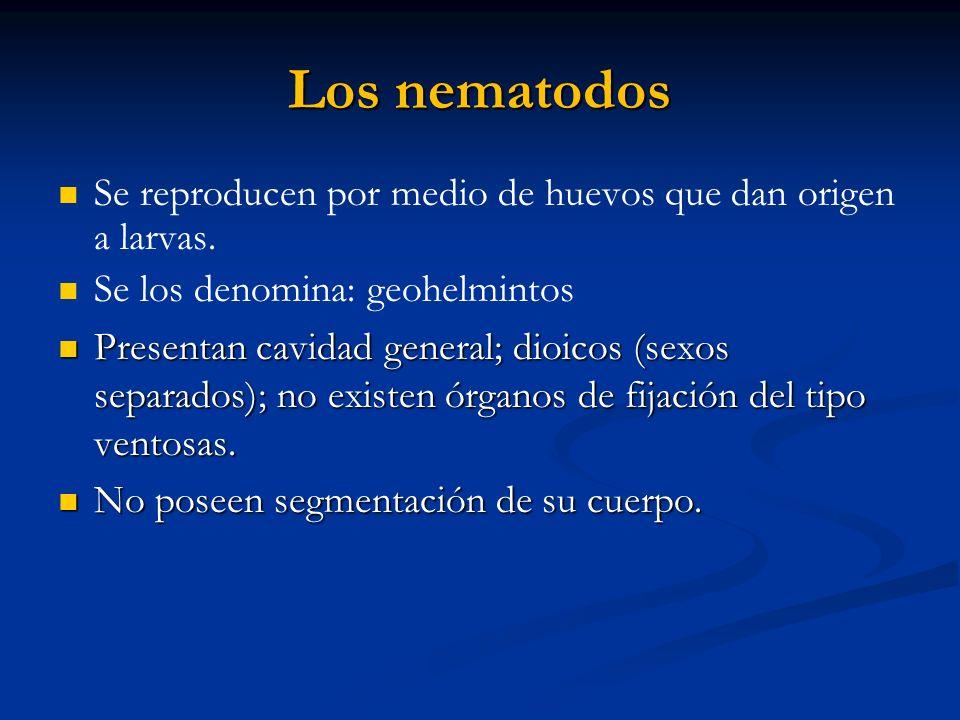 Los nematodosSe reproducen por medio de huevos que dan origen a larvas. Se los denomina: geohelmintos.
