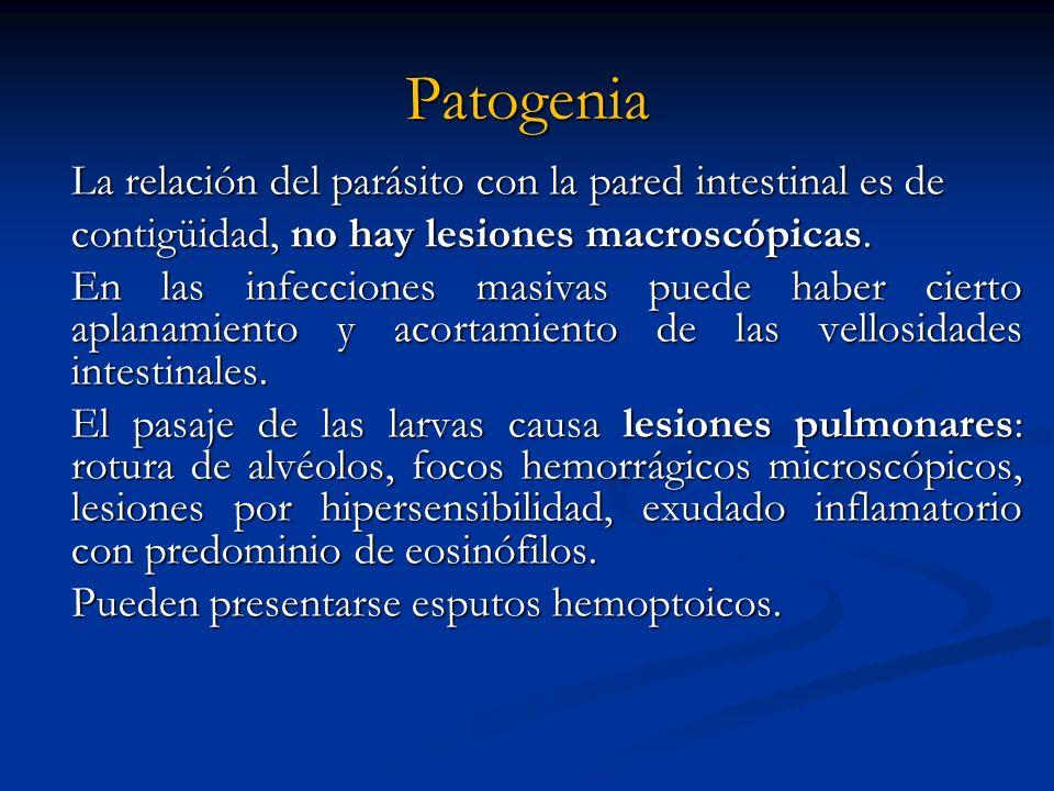 Patogenia contigüidad, no hay lesiones macroscópicas.