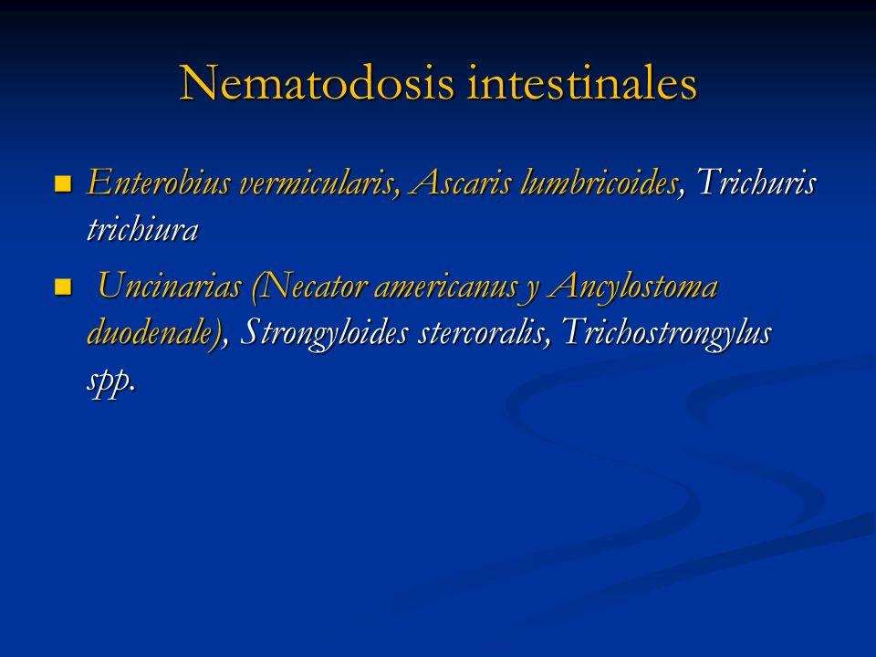 Nematodosis intestinales
