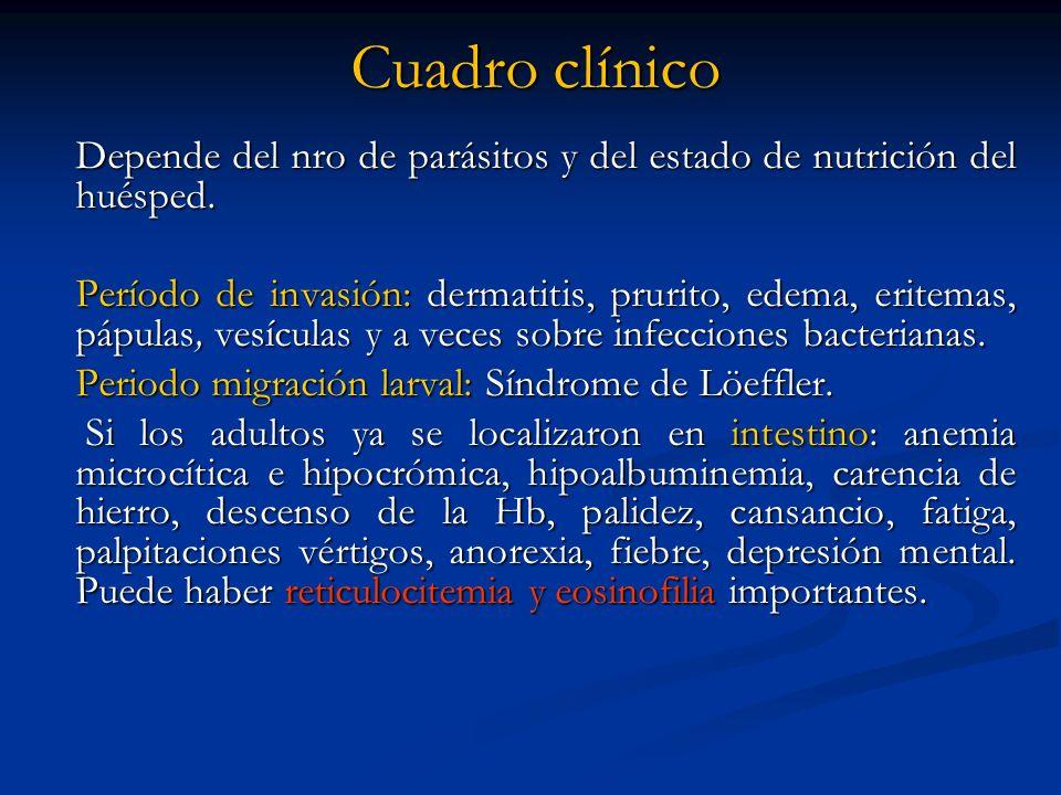 Cuadro clínico Depende del nro de parásitos y del estado de nutrición del huésped.
