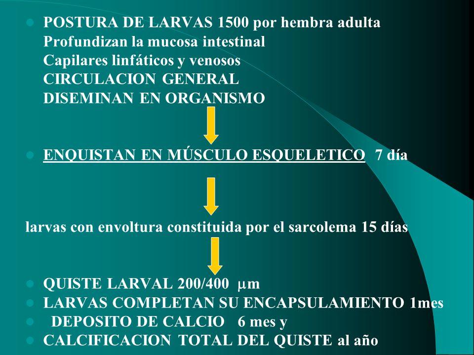 POSTURA DE LARVAS 1500 por hembra adulta