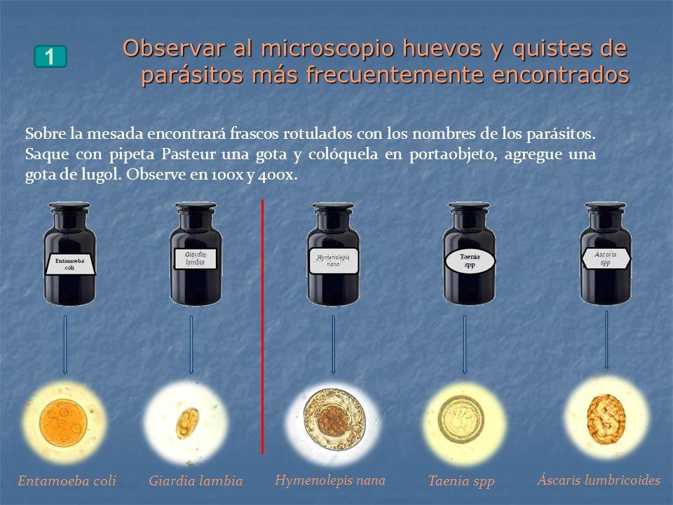 Observar al microscopio huevos y quistes de parásitos más frecuentemente encontrados