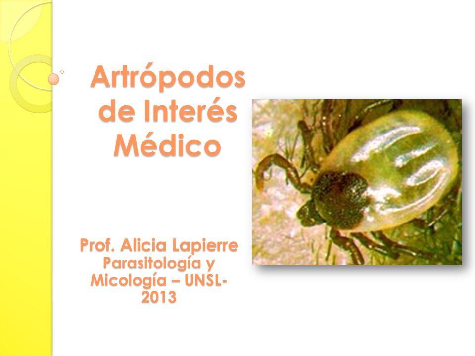 Artrópodos de Interés Médico