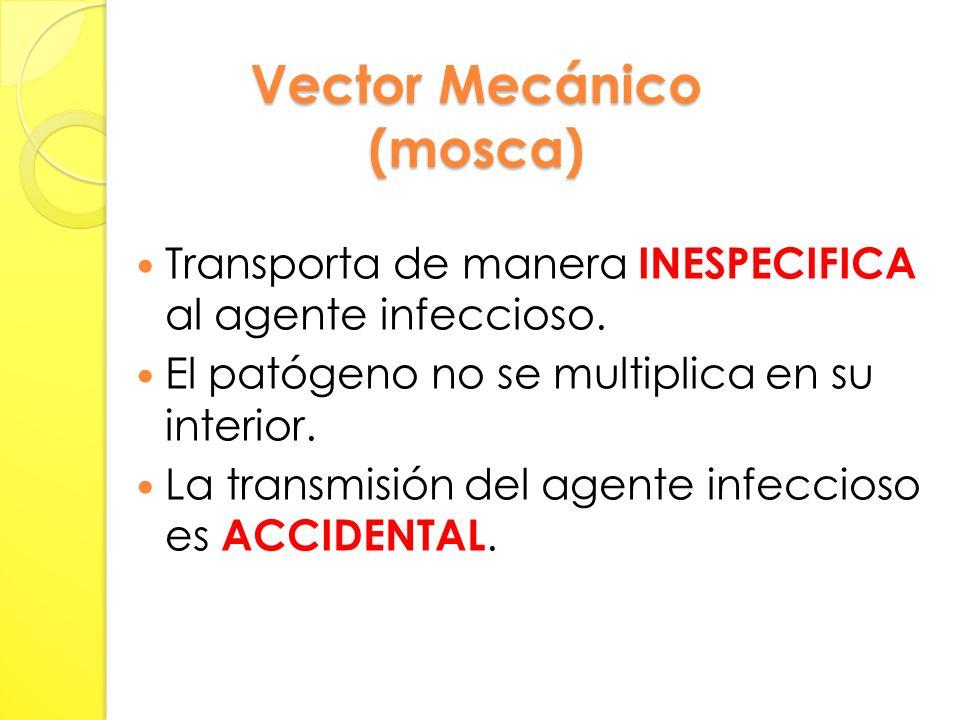 Vector Mecánico (mosca)