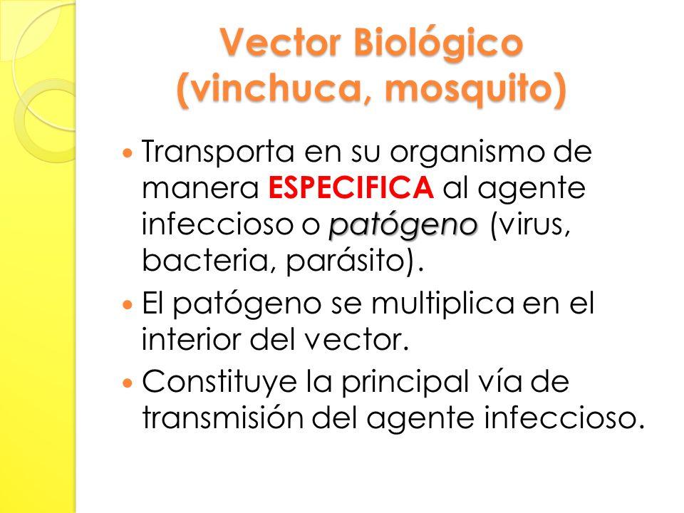 Vector Biológico (vinchuca, mosquito)