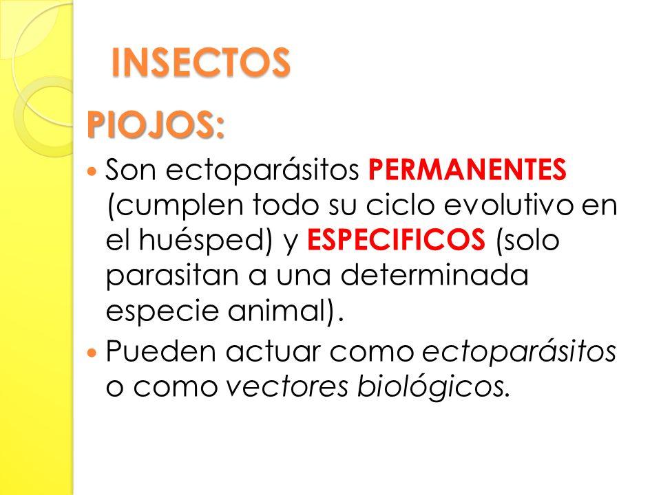 INSECTOS PIOJOS: