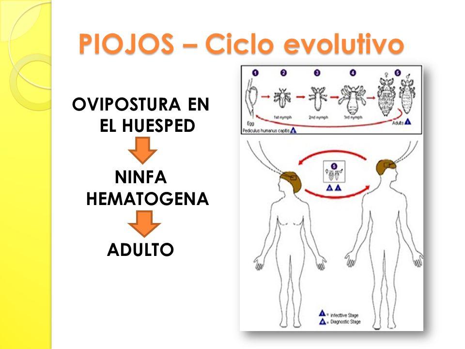 PIOJOS – Ciclo evolutivo