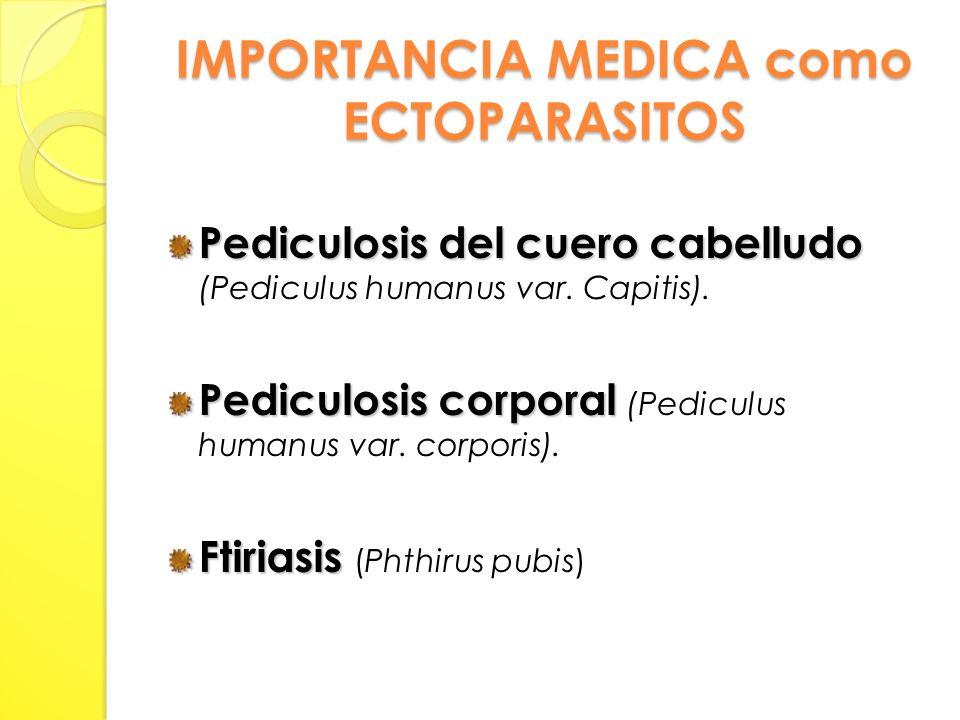 IMPORTANCIA MEDICA como ECTOPARASITOS