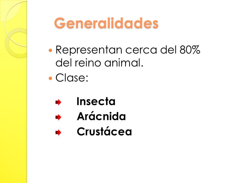 Generalidades Representan cerca del 80% del reino animal. Clase: