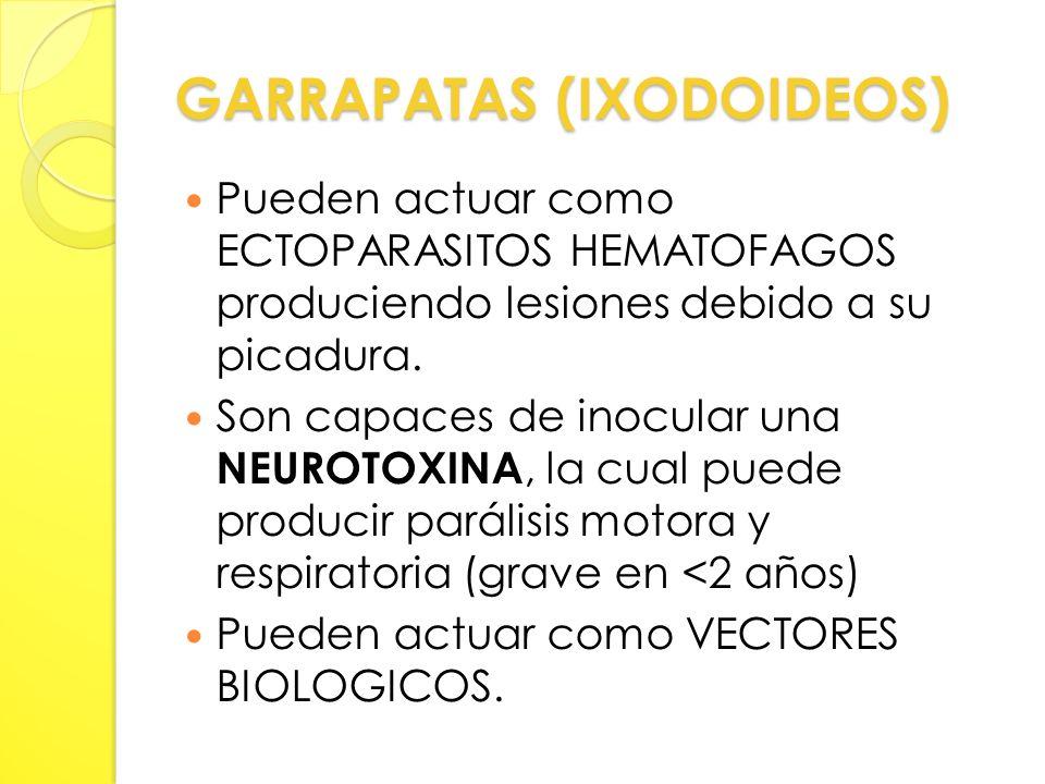 GARRAPATAS (IXODOIDEOS)