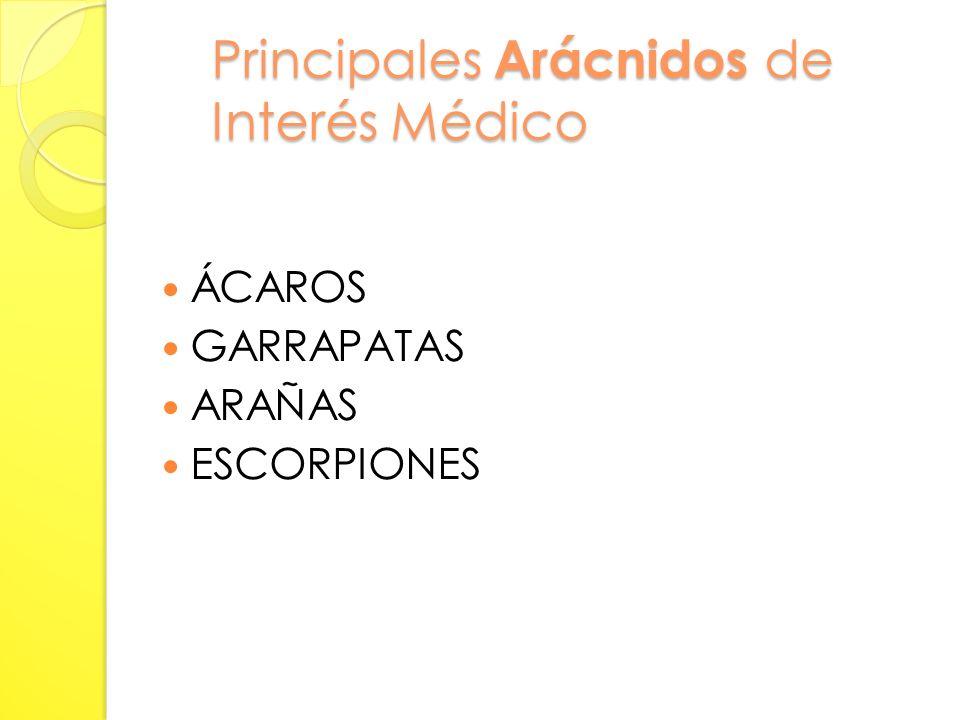 Principales Arácnidos de Interés Médico