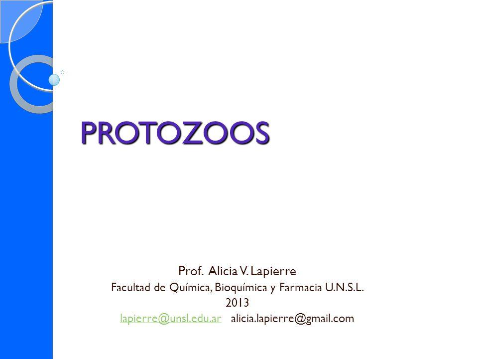 PROTOZOOS Prof. Alicia V. Lapierre