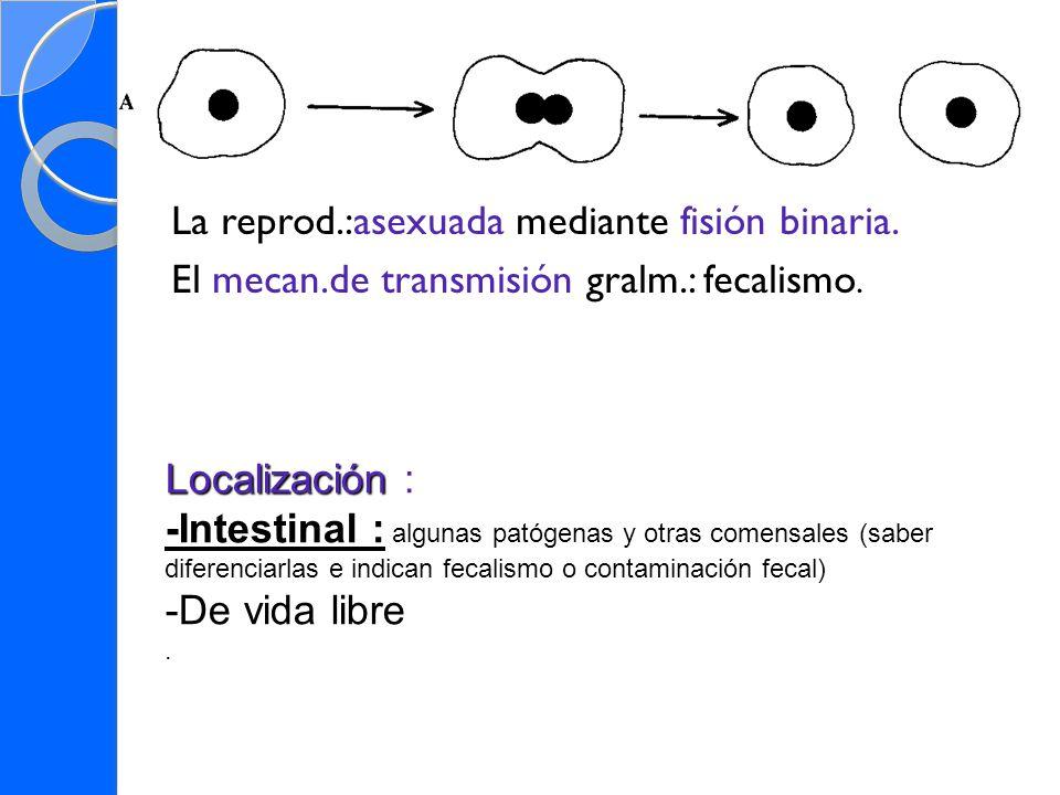 El mecan.de transmisión gralm.: fecalismo.