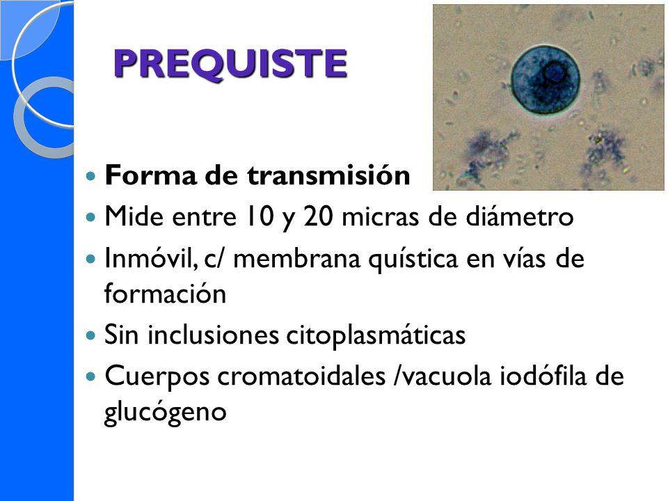 PREQUISTE Forma de transmisión Mide entre 10 y 20 micras de diámetro