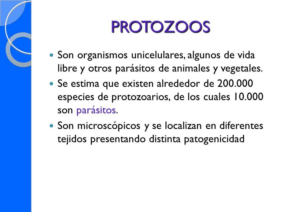 PROTOZOOSSon organismos unicelulares, algunos de vida libre y otros parásitos de animales y vegetales.