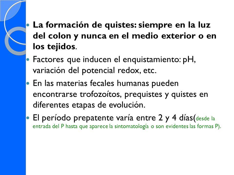 La formación de quistes: siempre en la luz del colon y nunca en el medio exterior o en los tejidos.