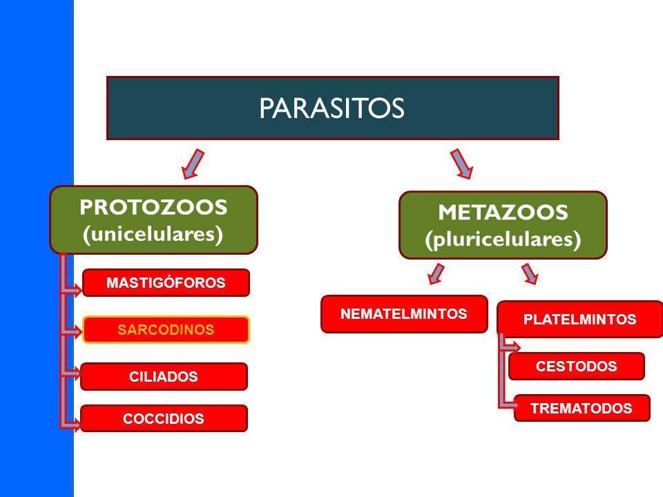 PARASITOS PROTOZOOS METAZOOS (unicelulares) (pluricelulares)