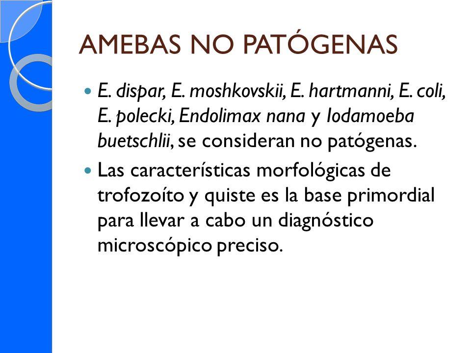 AMEBAS NO PATÓGENAS