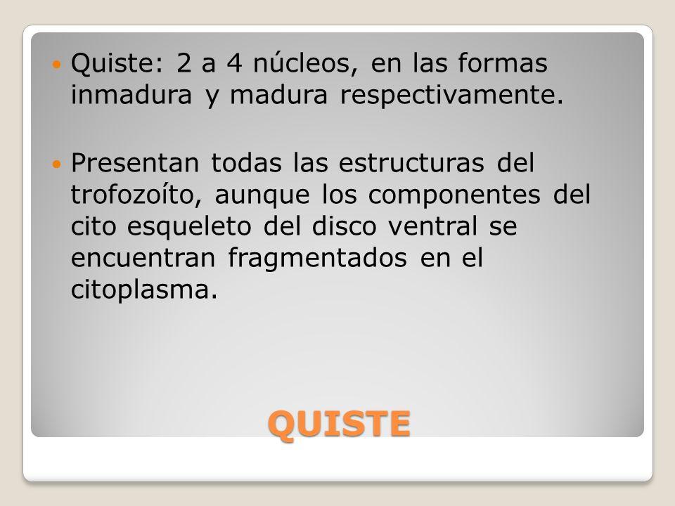 Quiste: 2 a 4 núcleos, en las formas inmadura y madura respectivamente.