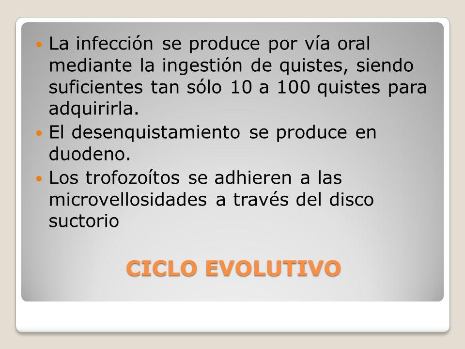 La infección se produce por vía oral mediante la ingestión de quistes, siendo suficientes tan sólo 10 a 100 quistes para adquirirla.