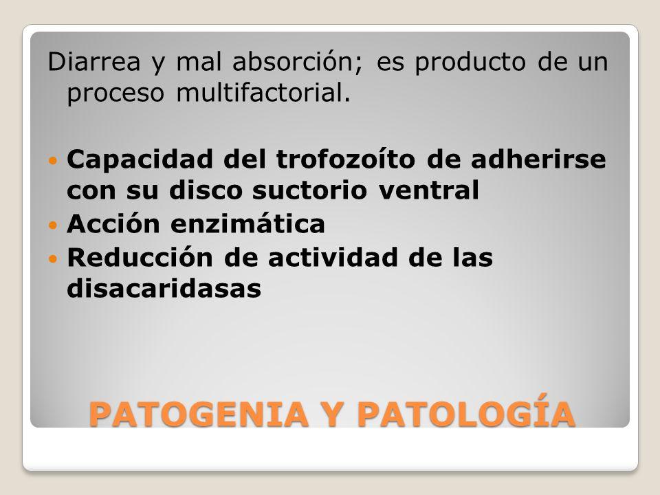 Diarrea y mal absorción; es producto de un proceso multifactorial.