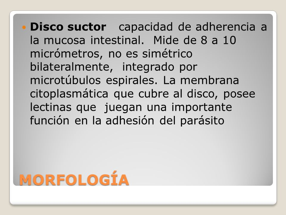 Disco suctor capacidad de adherencia a la mucosa intestinal
