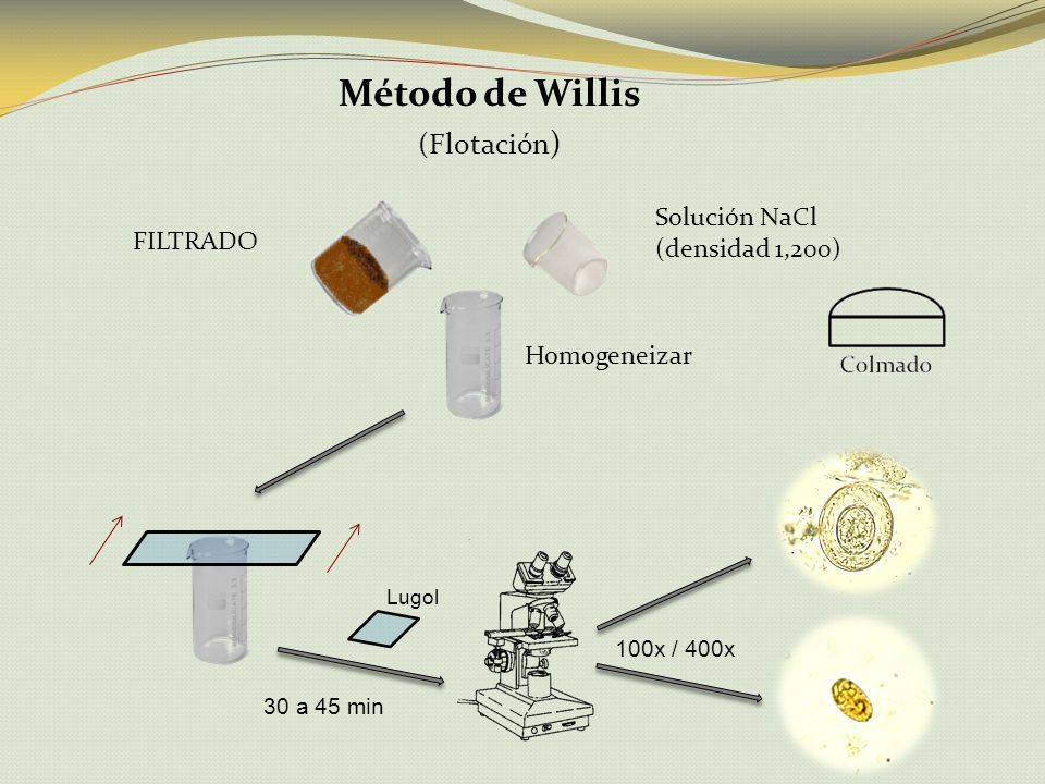 Método de Willis (Flotación) Solución NaCl (densidad 1,200) FILTRADO