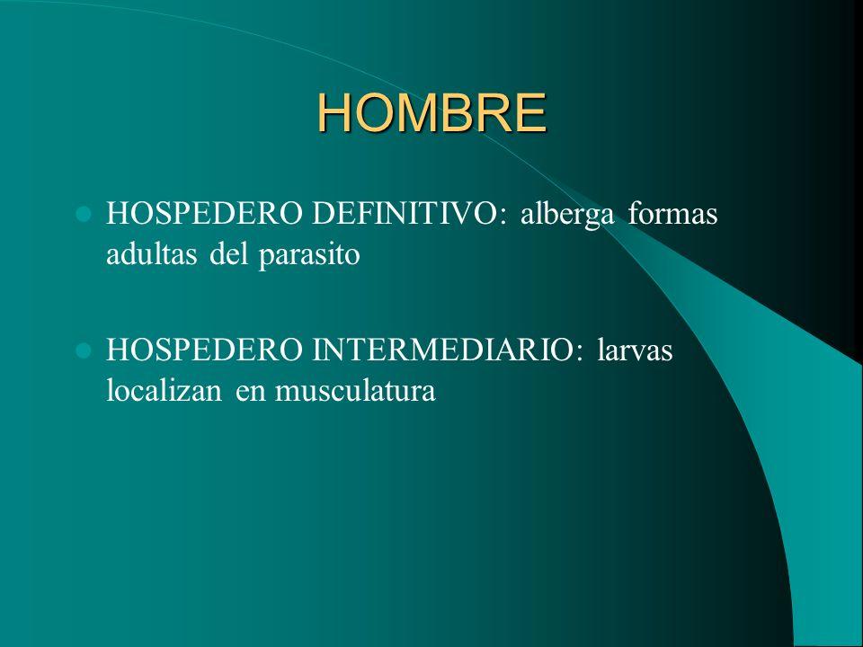 HOMBRE HOSPEDERO DEFINITIVO: alberga formas adultas del parasito