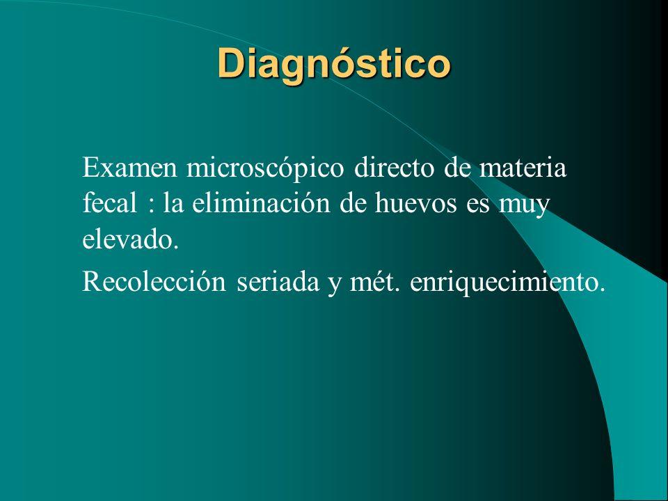 Diagnóstico Examen microscópico directo de materia fecal : la eliminación de huevos es muy elevado.