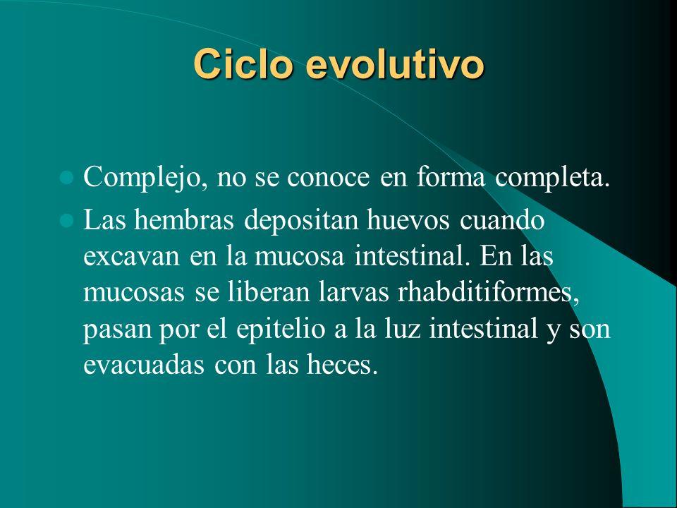 Ciclo evolutivo Complejo, no se conoce en forma completa.