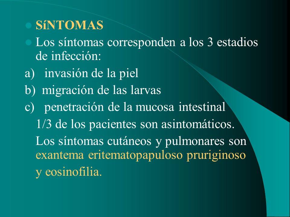 SíNTOMAS Los síntomas corresponden a los 3 estadios de infección: a) invasión de la piel. b) migración de las larvas.