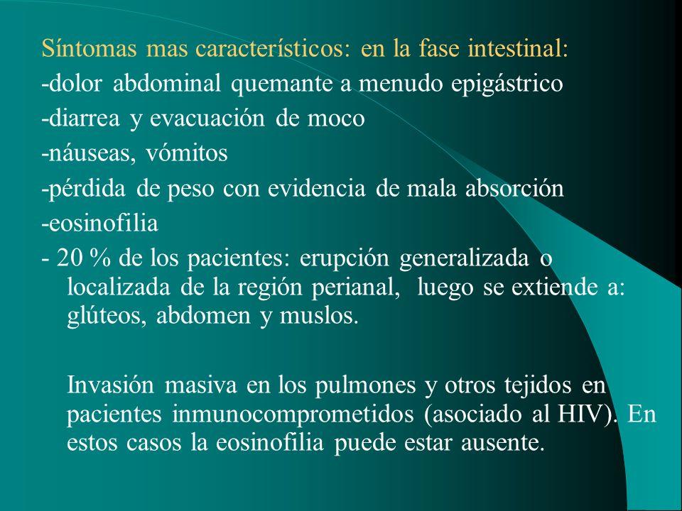 Síntomas mas característicos: en la fase intestinal: