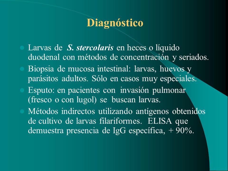 Diagnóstico Larvas de S. stercolaris en heces o líquido duodenal con métodos de concentración y seriados.