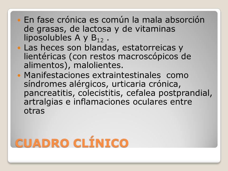 En fase crónica es común la mala absorción de grasas, de lactosa y de vitaminas liposolubles A y B12 .