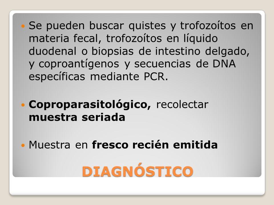 Se pueden buscar quistes y trofozoítos en materia fecal, trofozoítos en líquido duodenal o biopsias de intestino delgado, y coproantígenos y secuencias de DNA específicas mediante PCR.