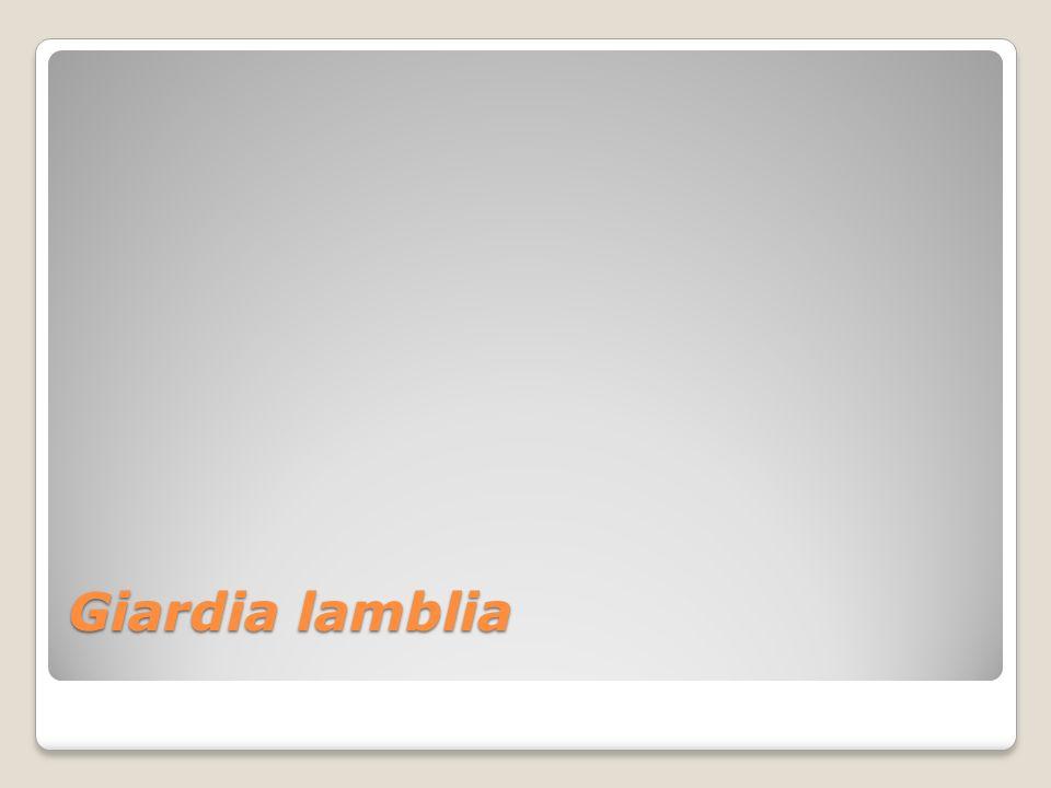 Giardia lamblia