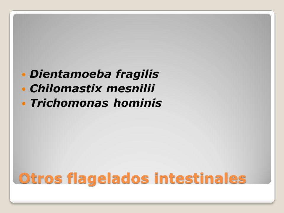 Otros flagelados intestinales