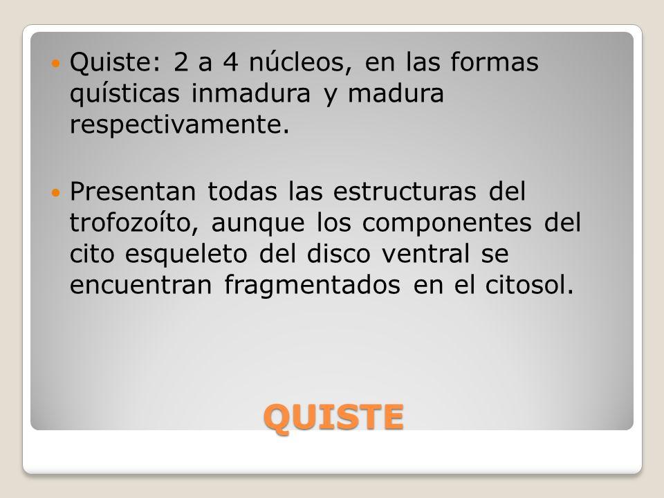 Quiste: 2 a 4 núcleos, en las formas quísticas inmadura y madura respectivamente.