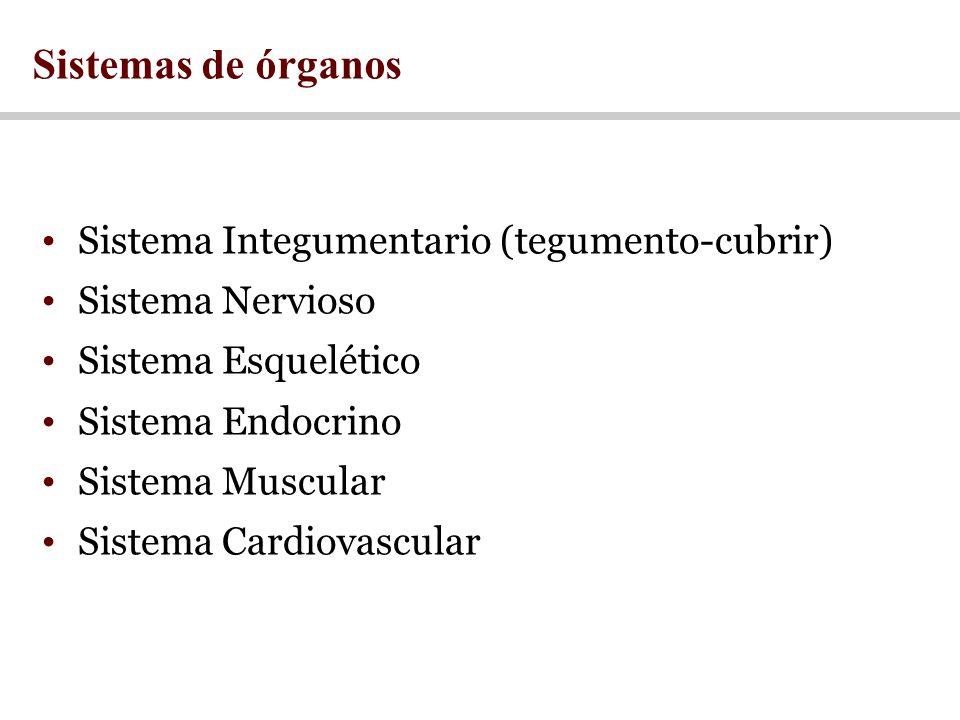 Sistemas de órganos Sistema Integumentario (tegumento-cubrir)