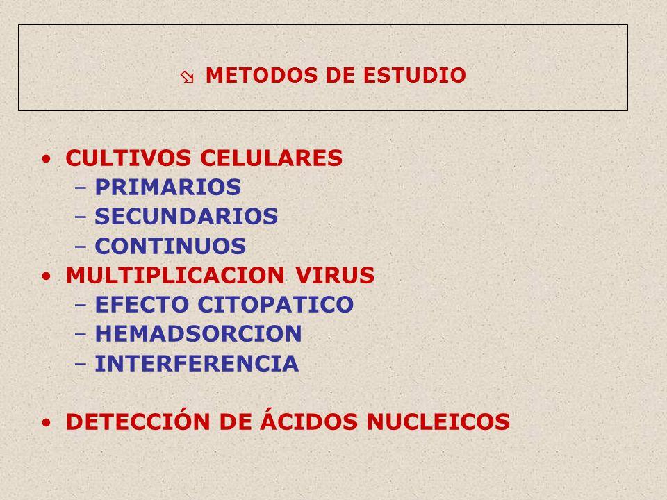 DETECCIÓN DE ÁCIDOS NUCLEICOS