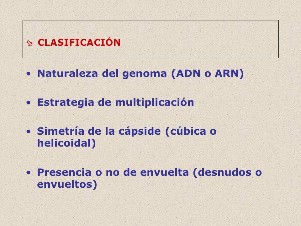 Naturaleza del genoma (ADN o ARN) Estrategia de multiplicación
