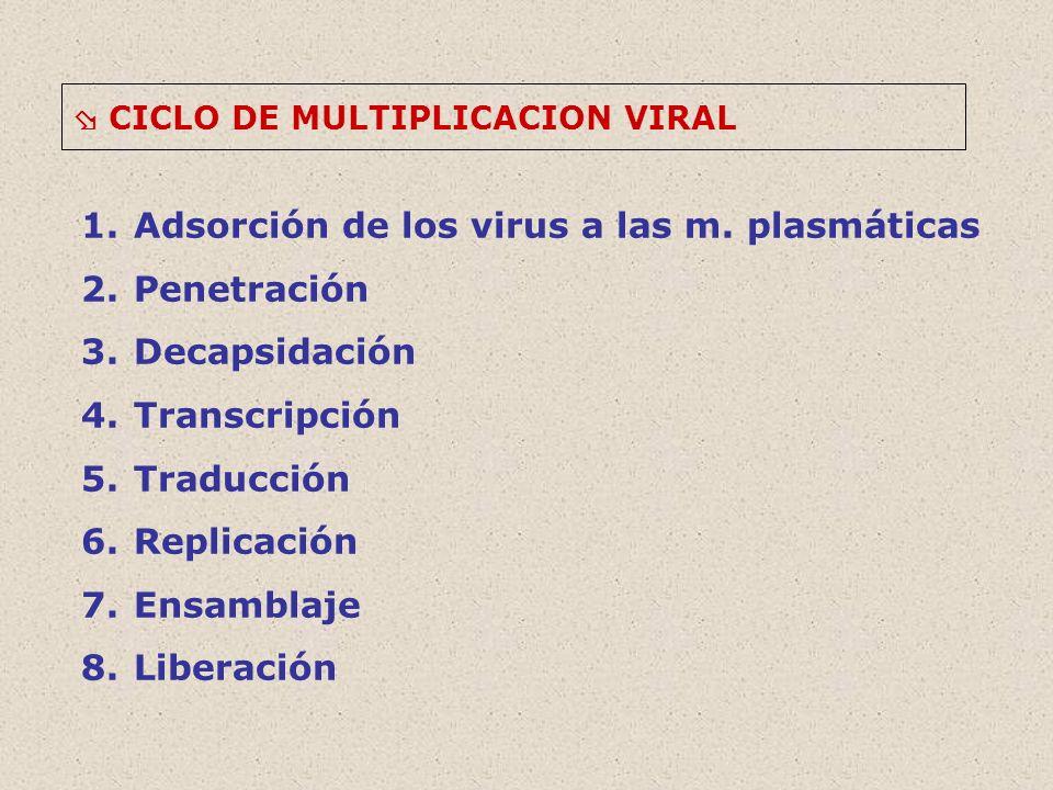 Adsorción de los virus a las m. plasmáticas Penetración Decapsidación