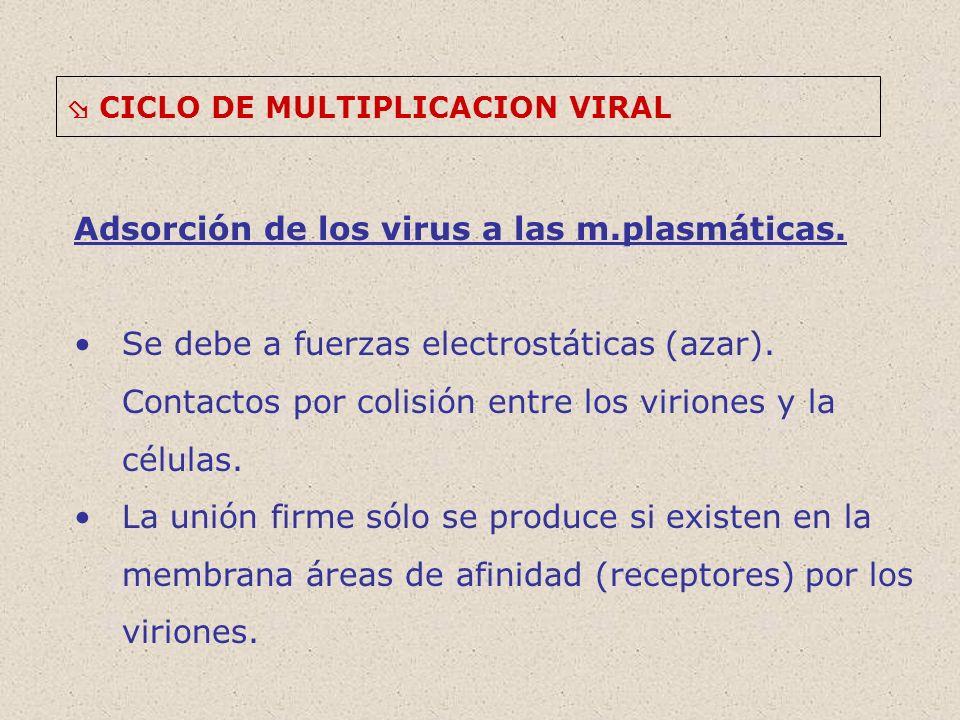 Adsorción de los virus a las m.plasmáticas.