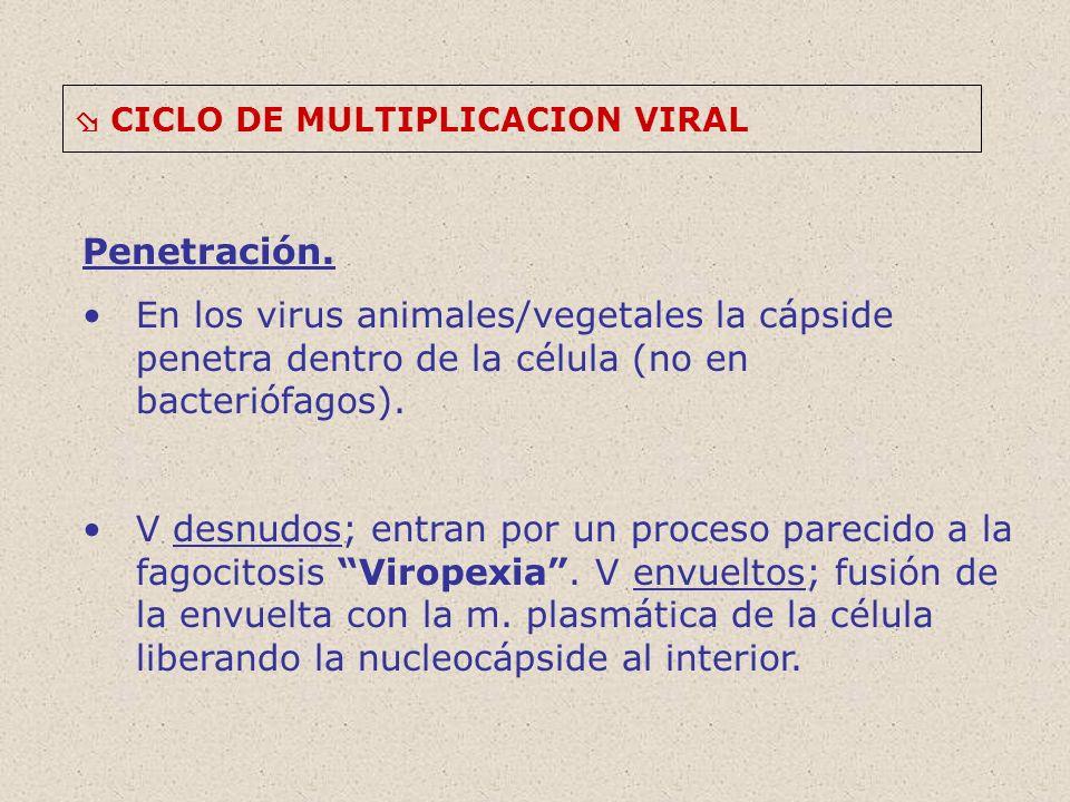  CICLO DE MULTIPLICACION VIRAL