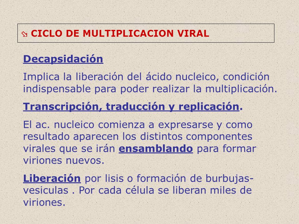 Transcripción, traducción y replicación.