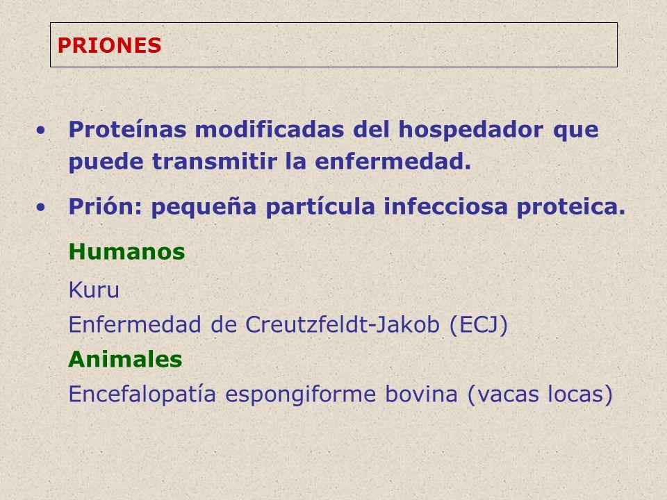 Prión: pequeña partícula infecciosa proteica. Humanos Kuru