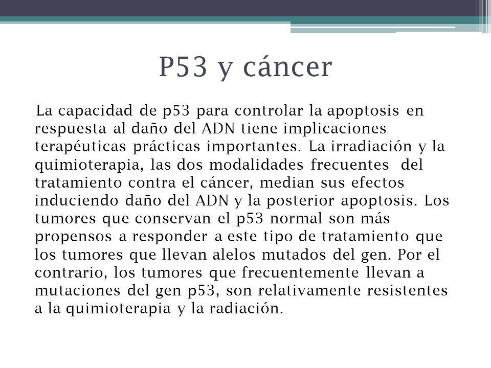 P53 y cáncer